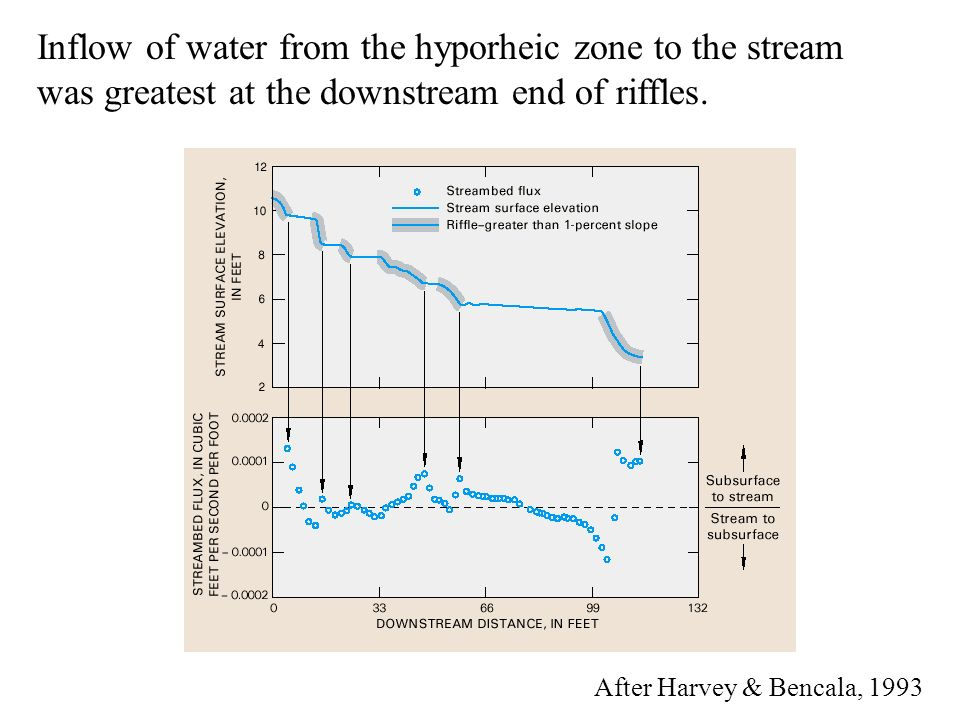 Inflow of water from the hyporheic zone to the stream was greatest at the downstream end of riffles.