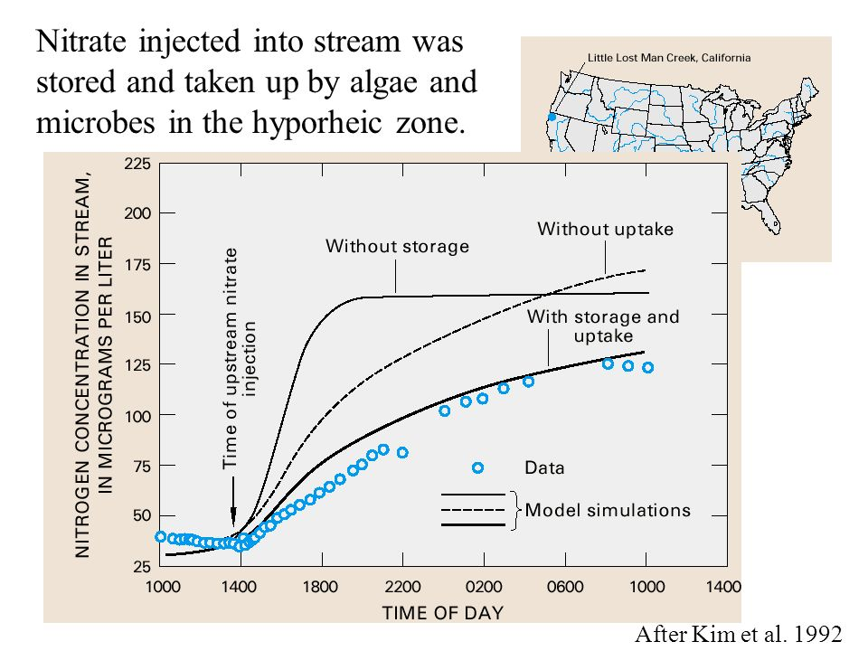 Nitrate injected into stream was stored and taken up by algae and microbes in the hyporheic zone.
