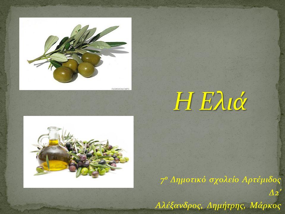  Ο πιο γνωστός αρχαίος μύθος που αναφέρεται στην καλλιέργεια της ελιάς είναι εκείνος που θεωρεί το δέντρο δώρο της Αθηνάς.