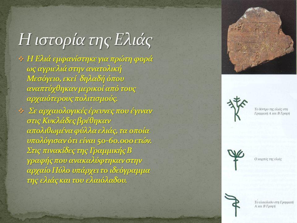  Η Ελιά εμφανίστηκε για πρώτη φορά ως αγριελιά στην ανατολική Μεσόγειο, εκεί δηλαδή όπου αναπτύχθηκαν μερικοί από τους αρχαιότερους πολιτισμούς.  Σε