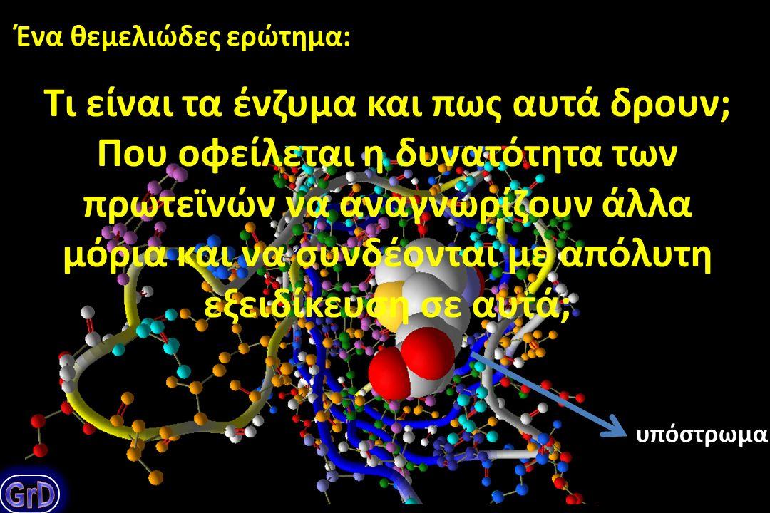 Οι πρωτεΐνες: τα μοριακά εργαλεία του κυττάρου
