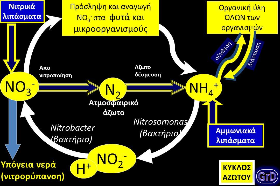 Πως καλύπτουν τα φυτά και τα ζώα τις ανάγκες τους σε άζωτο; Ποιες ανόργανες μορφές αζώτου προσλαμβάνουν τα φυτά, τα ζώα; Τι είναι η αζωτοδέσμευση; Ποιος ο κύκλος του αζώτου στη βιόσφαιρα; Θεμελιώδες ερώτημα: