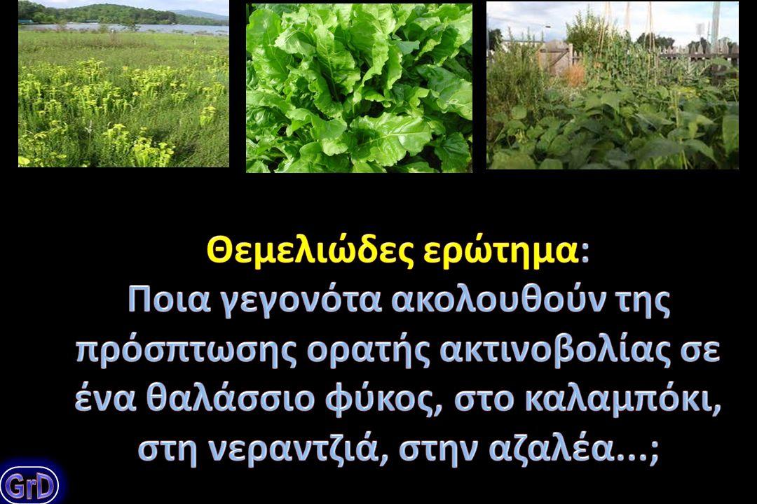 Πως παράγεται η οργανική ύλη στα φυτά; Ποια ένζυμα είναι υπεύθυνα για τη δέσμευση του ατμοσφαιρικού CO 2 ; Ποια τα χαρακτηριστικά γνωρίσματα του ενζύμου Rubisco και πως τα αξιοποιούμε; Ένα θεμελιώδες ερώτημα: