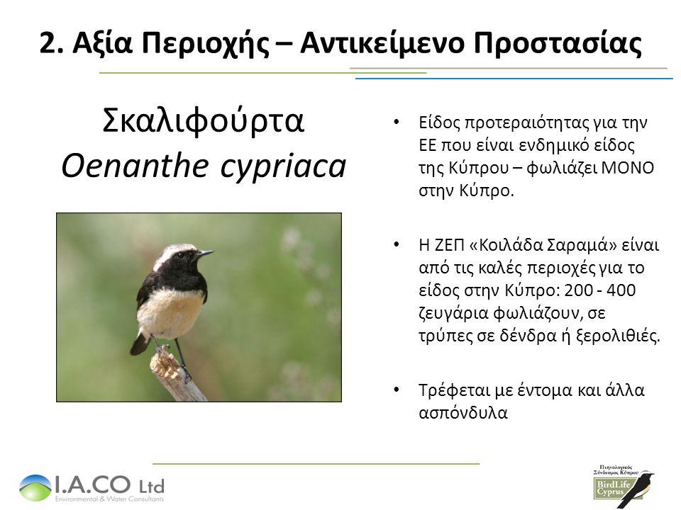 Δακκαννούρα Lanius nubicus Η Κύπρος φιλοξενεί σημαντικό ποσοστό του πληθυσμού της Ευρώπης.