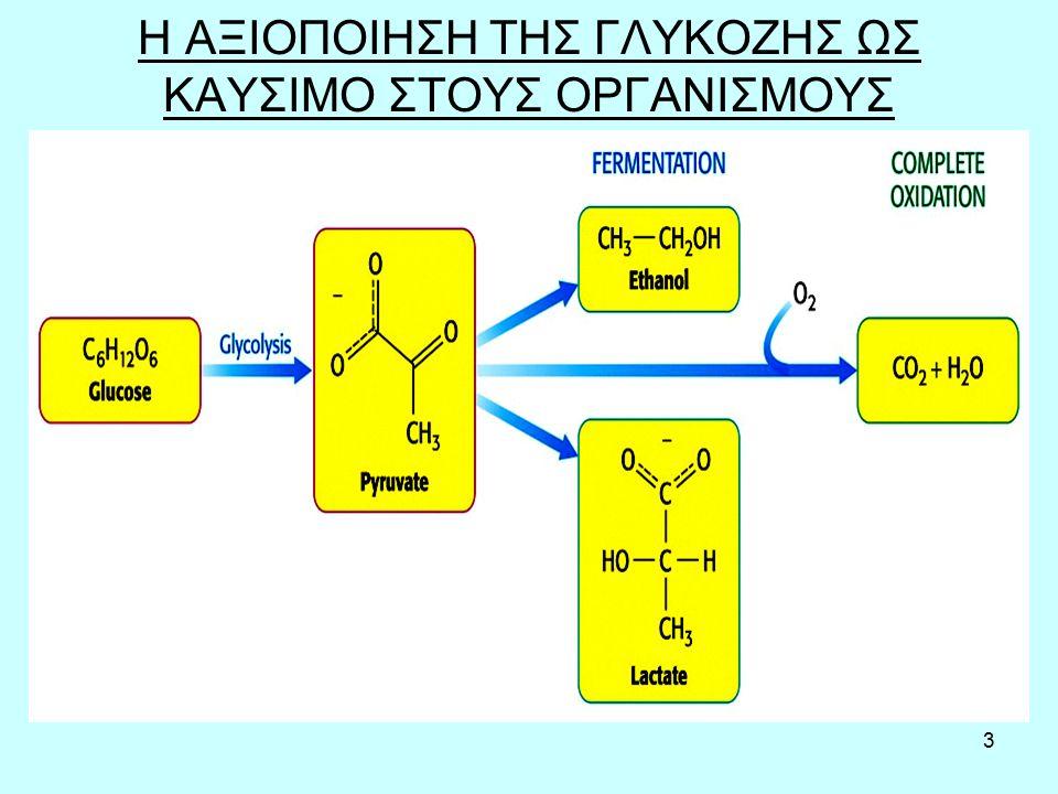 4 Εισαγωγή της γλυκόζης στα κύτταρα Η απορρόφηση της γλυκόζης από το έντερο γίνεται είτε με διευκολυνόμενη μεταφορά μέσω των γλυκομεταφορέων που υπάρχουν και στα ενδοθηλιακά κύτταρα του εντέρου (πρωτεΐνες στην μεμβράνη των κυττάρων, που συνδέονται με την γλυκόζη και την βάζουν μέσα στο κύτταρο), είτε με μεταφορείς νατρίου-γλυκόζης.