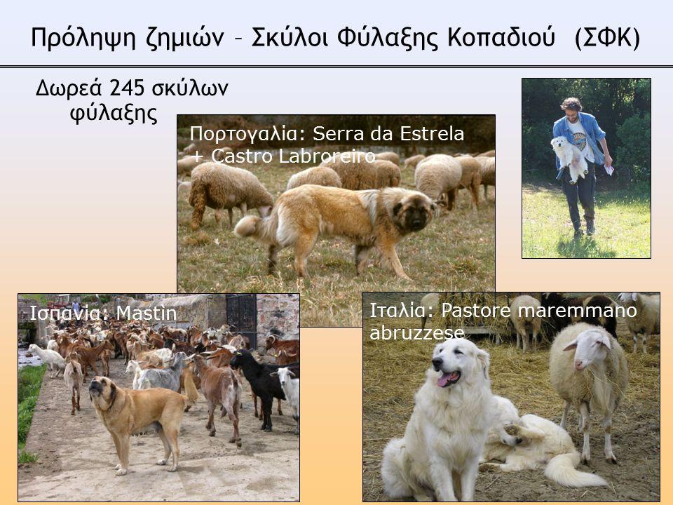 Πορτογαλία: Serra da Estrela + Castro Labroreiro Ισπανία: Mastìn Ιταλία: Pastore maremmano abruzzese Πρόληψη ζημιών – Σκύλοι Φύλαξης Κοπαδιού (ΣΦΚ) Δωρεά 245 σκύλων φύλαξης