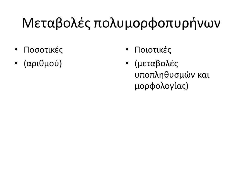Μεταβολές πολυμορφοπυρήνων Ποσοτικές (αριθμού) Ποιοτικές (μεταβολές υποπληθυσμών και μορφολογίας)