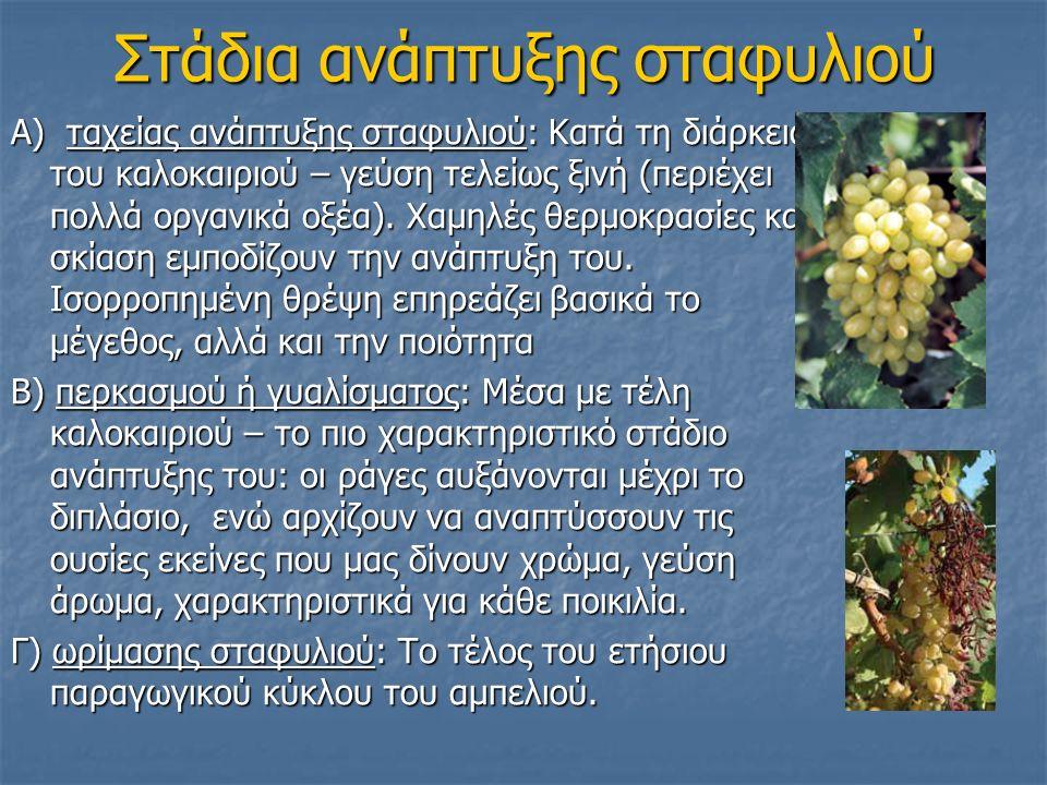 Στάδια ανάπτυξης σταφυλιού Α) ταχείας ανάπτυξης σταφυλιού: Κατά τη διάρκεια του καλοκαιριού – γεύση τελείως ξινή (περιέχει πολλά οργανικά οξέα).