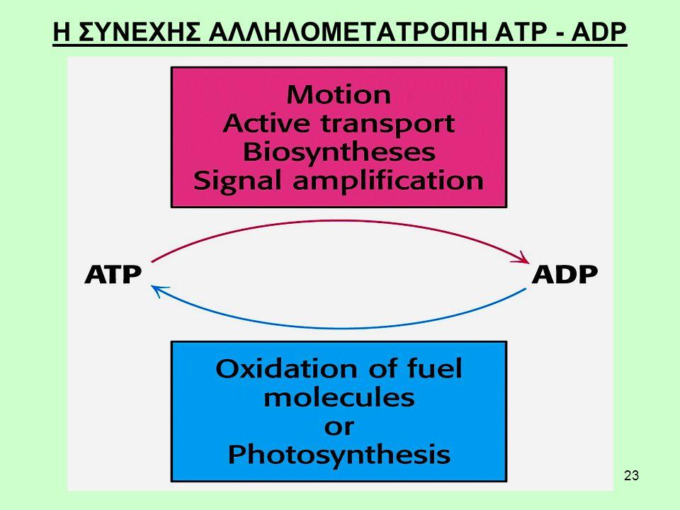 23 Η ΣΥΝΕΧΗΣ ΑΛΛΗΛΟΜΕΤΑΤΡΟΠΗ ATP - ADP
