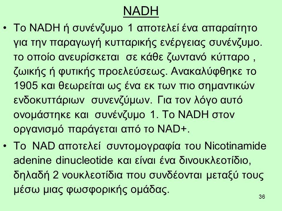 36 NADH Το NADH ή συνένζυμο 1 αποτελεί ένα απαραίτητο για την παραγωγή κυτταρικής ενέργειας συνένζυμο. το οποίο ανευρίσκεται σε κάθε ζωντανό κύτταρο,
