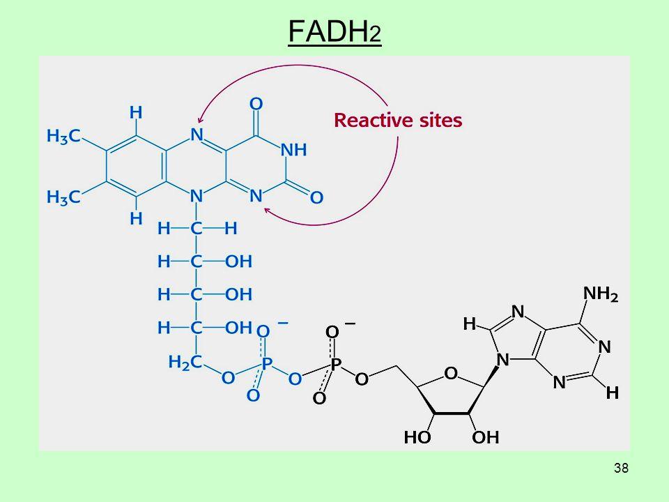 38 FADH 2