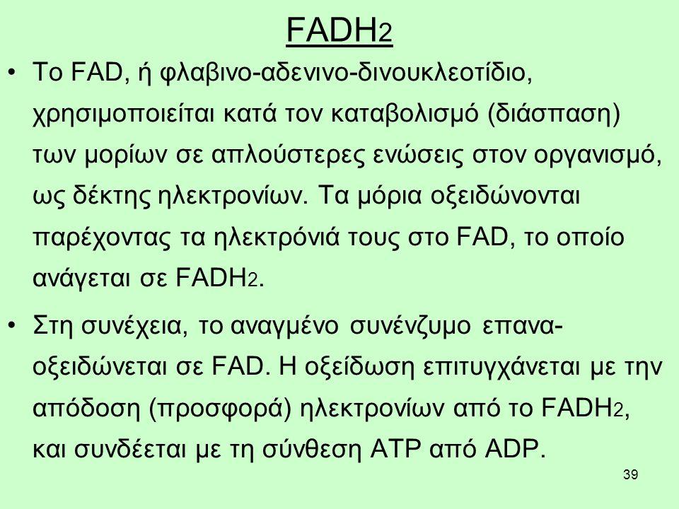 39 FADH 2 Tο FAD, ή φλαβινο-αδενινο-δινουκλεοτίδιο, χρησιμοποιείται κατά τον καταβολισμό (διάσπαση) των μορίων σε απλούστερες ενώσεις στον οργανισμό, ως δέκτης ηλεκτρονίων.