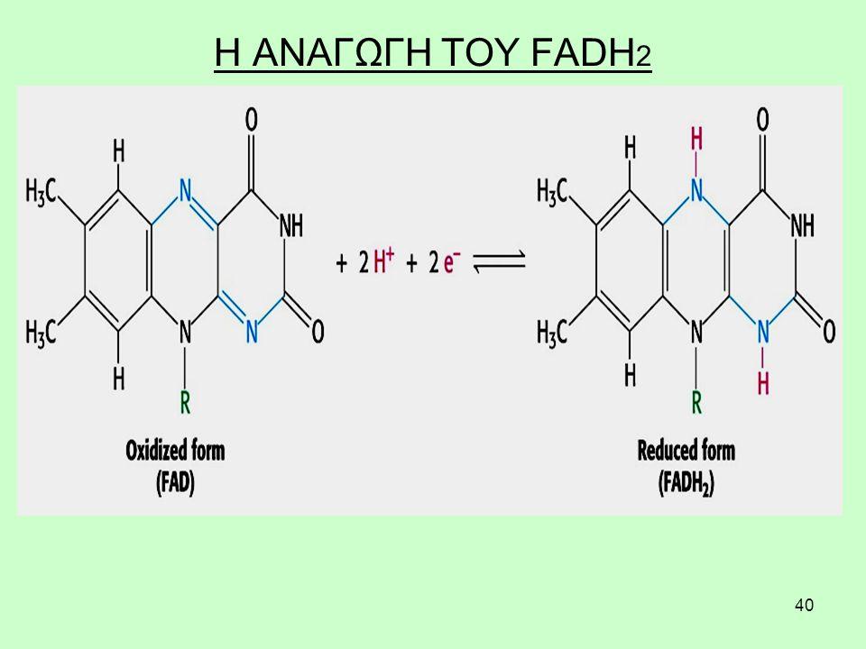 40 Η ΑΝΑΓΩΓΗ ΤΟΥ FADH 2