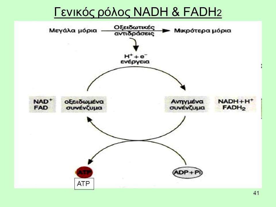 41 Γενικός ρόλος NADH & FADH 2 ΑΤΡ