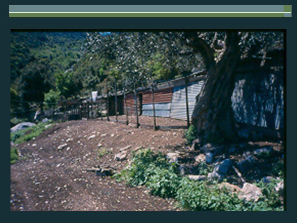 Μείωση κόστους παραγωγής  Παραγωγικότερα ζώα  Ισόρροπη διατροφή  Ιδιοπαραγόμενες ζωοτροφές Τριφύλλι Συγκαλλιέργεια ψυχανθών – αγρωστωδών*  Χρησιμοποίηση υποπροϊόντων (βάμβακος – ηλιόσπορου κλπ.)