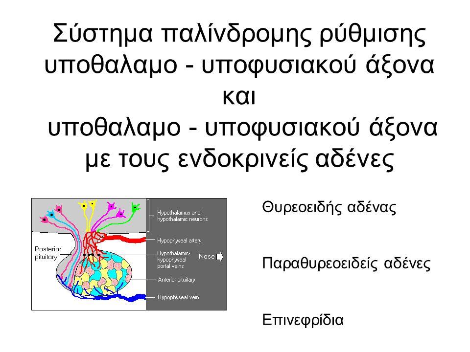 Σύστημα παλίνδρομης ρύθμισης υποθαλαμο - υποφυσιακού άξονα και υποθαλαμο - υποφυσιακού άξονα με τους ενδοκρινείς αδένες Θυρεοειδής αδένας Παραθυρεοειδείς αδένες Επινεφρίδια