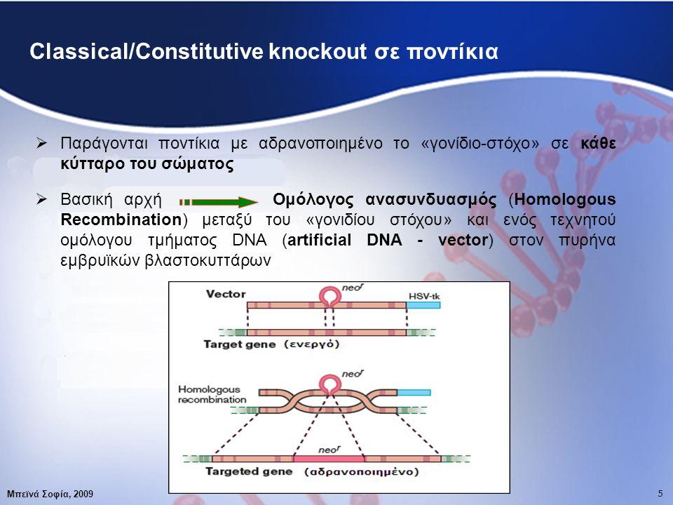 5 Μπεϊνά Σοφία, 2009 5 Classical/Constitutive knockout σε ποντίκια  Παράγονται ποντίκια με αδρανοποιημένο το «γονίδιο-στόχο» σε κάθε κύτταρο του σώματος  Βασική αρχή Ομόλογος ανασυνδυασμός (Homologous Recombination) μεταξύ του «γονιδίου στόχου» και ενός τεχνητού ομόλογου τμήματος DNA (artificial DNA - vector) στον πυρήνα εμβρυϊκών βλαστοκυττάρων