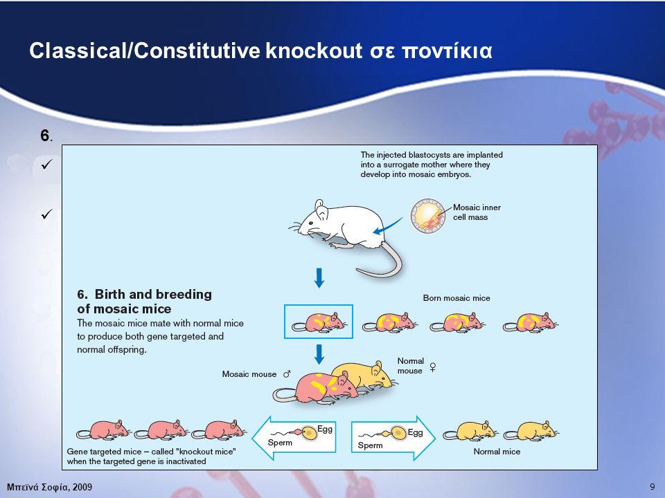 10 Μπεϊνά Σοφία, 2009 10 Conditional knockout σε ποντίκια Ποια μειονεκτήματα του constitutive gene targeting μας οδήγησαν στην ανάπτυξη αυτής της νέας τεχνικής ;  15% του constitutive gene targeting καταλήγει σε θάνατο  Πολλά γονίδια εκφράζουν τη δράση τους σε διαφορετικά οντογενετικά στάδια ή σε διαφορετικούς ιστούς Conditional gene targeting Αδρανοποίηση γονιδίου- στόχου σε εξειδικευμένο ιστό ή σε συγκεκριμένη οντογενετική φάση