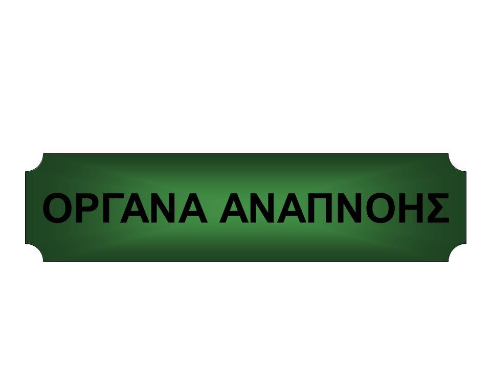 ΟΡΓΑΝΑ ΑΝΑΠΝΟΗΣ