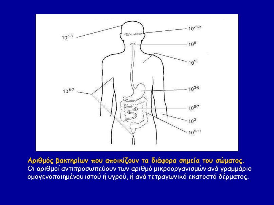 Αριθμός βακτηρίων που αποικίζουν τα διάφορα σημεία του σώματος. Οι αριθμοί αντιπροσωπεύουν των αριθμό μικροοργανισμών ανά γραμμάριο ομογενοποιημένου ι