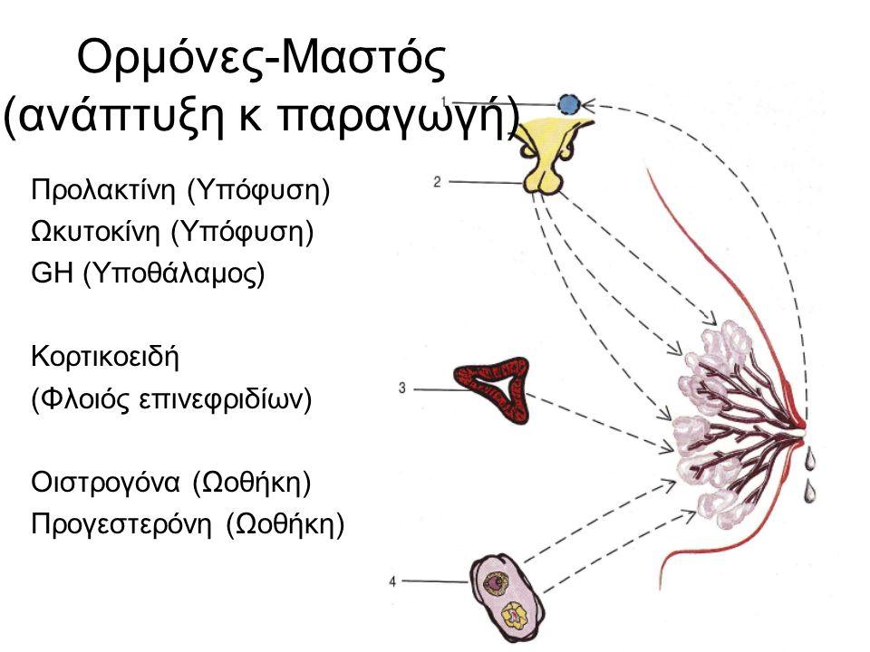 Προλακτίνη (Υπόφυση) Ωκυτοκίνη (Υπόφυση) GH (Υποθάλαμος) Κορτικοειδή (Φλοιός επινεφριδίων) Οιστρογόνα (Ωοθήκη) Προγεστερόνη (Ωοθήκη) Ορμόνες-Μαστός (ανάπτυξη κ παραγωγή)