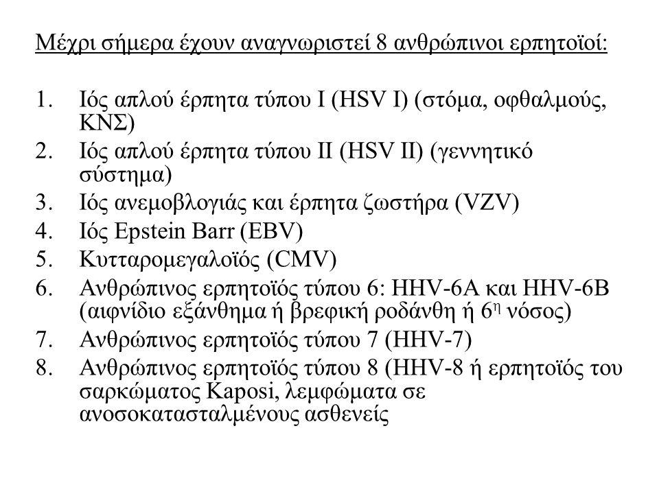Μέχρι σήμερα έχουν αναγνωριστεί 8 ανθρώπινοι ερπητοϊοί: 1.Ιός απλού έρπητα τύπου Ι (HSV I) (στόμα, οφθαλμούς, ΚΝΣ) 2.Ιός απλού έρπητα τύπου ΙΙ (HSV ΙI) (γεννητικό σύστημα) 3.Ιός ανεμοβλογιάς και έρπητα ζωστήρα (VZV) 4.Ιός Epstein Barr (EBV) 5.Κυτταρομεγαλοϊός (CMV) 6.Ανθρώπινος ερπητοϊός τύπου 6: HHV-6Α και HHV-6Β (αιφνίδιο εξάνθημα ή βρεφική ροδάνθη ή 6 η νόσος) 7.Ανθρώπινος ερπητοϊός τύπου 7 (HHV-7) 8.Ανθρώπινος ερπητοϊός τύπου 8 (HHV-8 ή ερπητοϊός του σαρκώματος Kaposi, λεμφώματα σε ανοσοκατασταλμένους ασθενείς