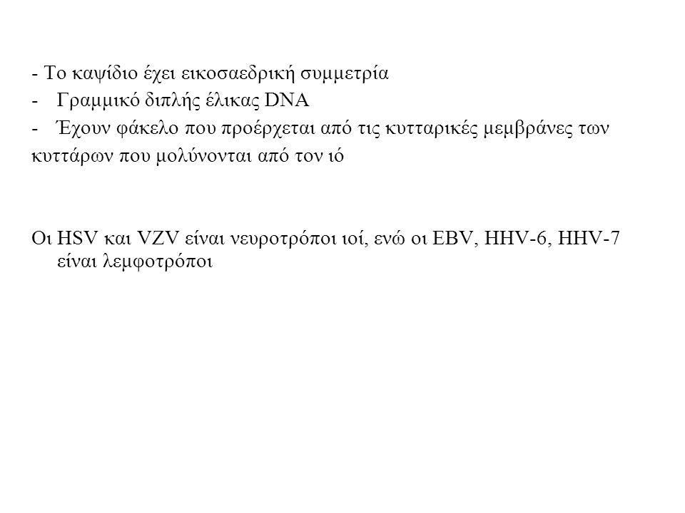 - Το καψίδιο έχει εικοσαεδρική συμμετρία -Γραμμικό διπλής έλικας DNA -Έχουν φάκελο που προέρχεται από τις κυτταρικές μεμβράνες των κυττάρων που μολύνονται από τον ιό Οι HSV και VZV είναι νευροτρόποι ιοί, ενώ οι EBV, HHV-6, HHV-7 είναι λεμφοτρόποι