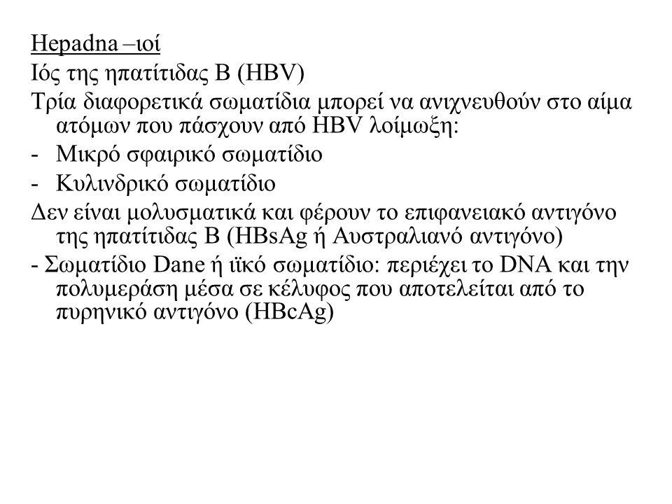 Hepadna –ιοί Ιός της ηπατίτιδας Β (HBV) Τρία διαφορετικά σωματίδια μπορεί να ανιχνευθούν στο αίμα ατόμων που πάσχουν από HBV λοίμωξη: -Μικρό σφαιρικό σωματίδιο -Κυλινδρικό σωματίδιο Δεν είναι μολυσματικά και φέρουν το επιφανειακό αντιγόνο της ηπατίτιδας Β (HBsAg ή Αυστραλιανό αντιγόνο) - Σωματίδιο Dane ή ιϊκό σωματίδιο: περιέχει το DNA και την πολυμεράση μέσα σε κέλυφος που αποτελείται από το πυρηνικό αντιγόνο (HBcAg)