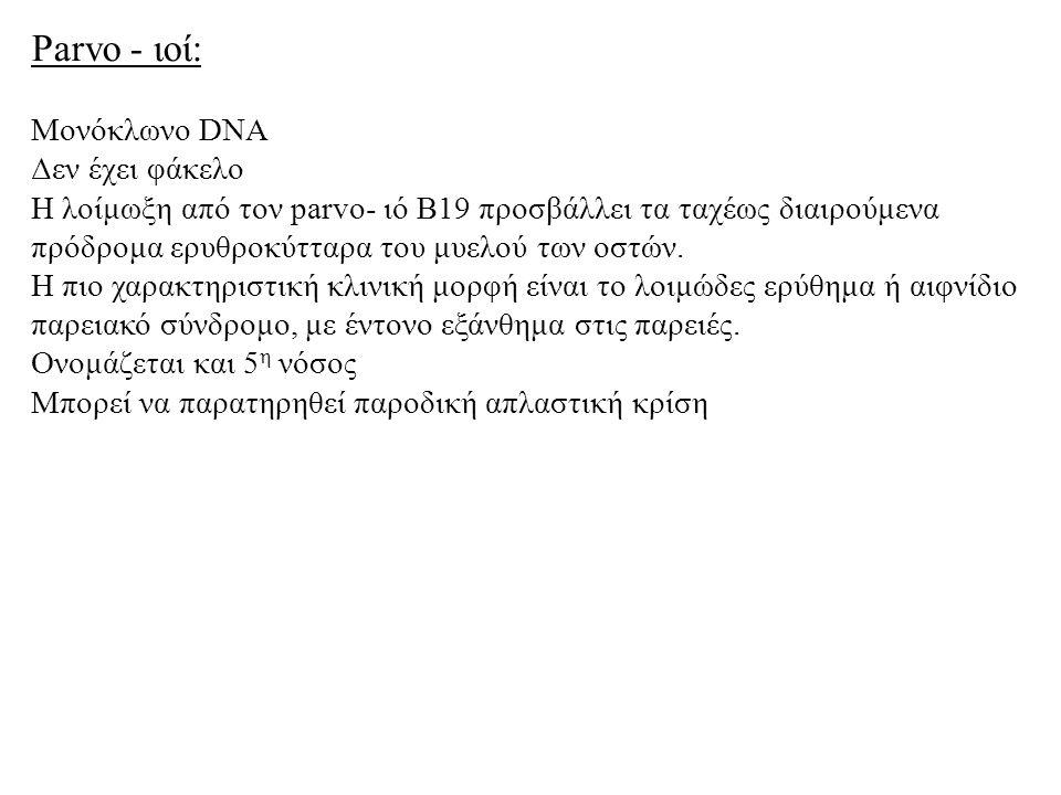 Parvo - ιοί: Μονόκλωνο DNA Δεν έχει φάκελο Η λοίμωξη από τον parvo- ιό Β19 προσβάλλει τα ταχέως διαιρούμενα πρόδρομα ερυθροκύτταρα του μυελού των οστών.