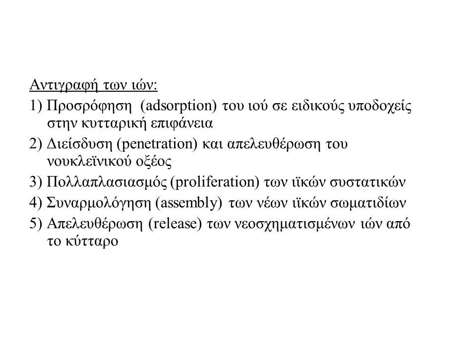 Αντιγραφή των ιών: 1) Προσρόφηση (adsorption) του ιού σε ειδικούς υποδοχείς στην κυτταρική επιφάνεια 2) Διείσδυση (penetration) και απελευθέρωση του νουκλεϊνικού οξέος 3) Πολλαπλασιασμός (proliferation) των ιϊκών συστατικών 4) Συναρμολόγηση (assembly) των νέων ιϊκών σωματιδίων 5) Απελευθέρωση (release) των νεοσχηματισμένων ιών από το κύτταρο