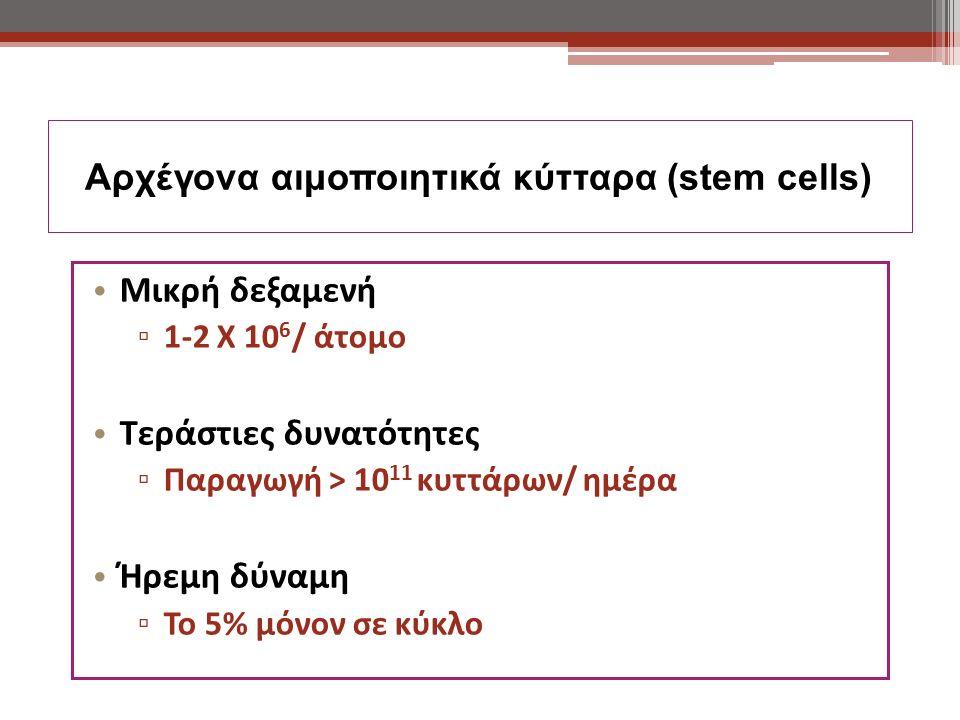 Αρχέγονα αιμοποιητικά κύτταρα (stem cells) Μικρή δεξαμενή ▫ 1-2 Χ 10 6 / άτομο Τεράστιες δυνατότητες ▫ Παραγωγή > 10 11 κυττάρων/ ημέρα Ήρεμη δύναμη ▫ Το 5% μόνον σε κύκλο