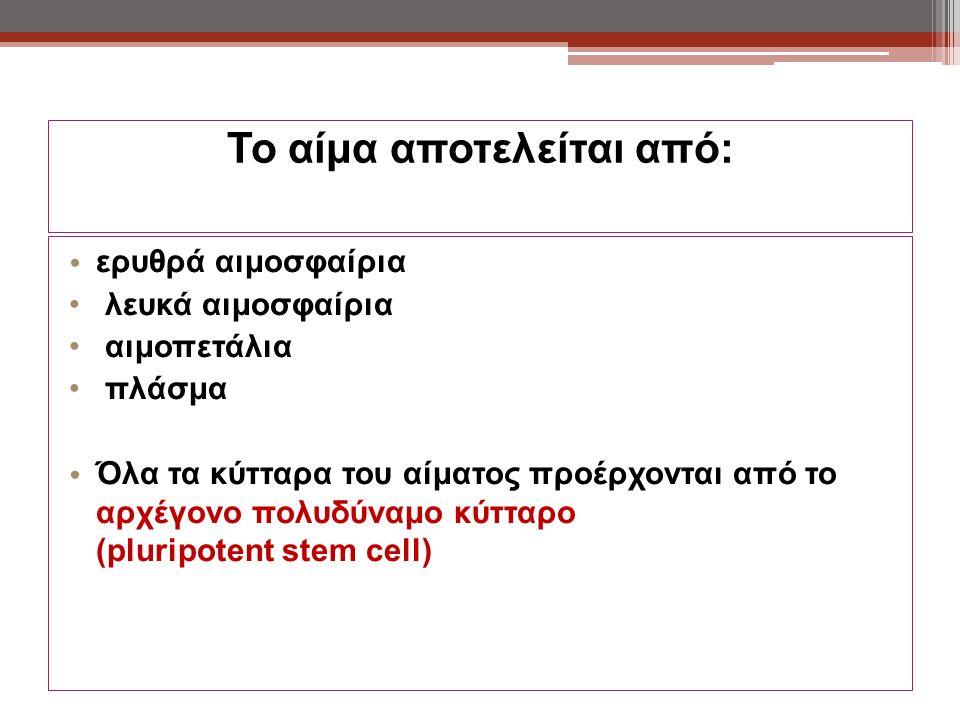 Το αίμα αποτελείται από: ερυθρά αιμοσφαίρια λευκά αιμοσφαίρια αιμοπετάλια πλάσμα Όλα τα κύτταρα του αίματος προέρχονται από το αρχέγονο πολυδύναμο κύτταρο (pluripotent stem cell)