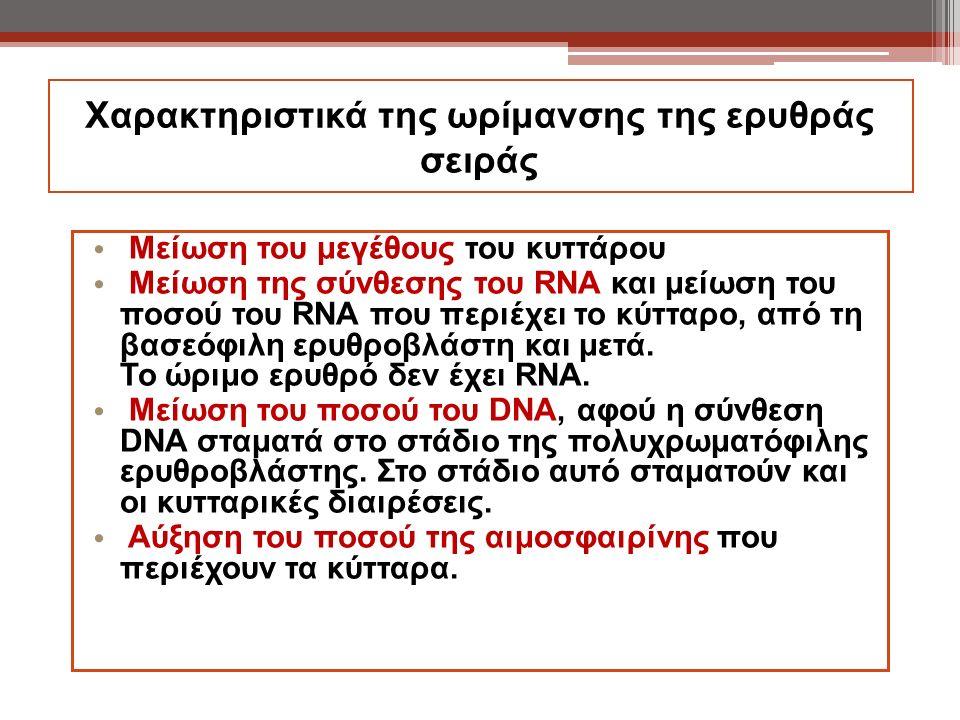 Χαρακτηριστικά της ωρίμανσης της ερυθράς σειράς Μείωση του μεγέθους του κυττάρου Μείωση της σύνθεσης του RNA και μείωση του ποσού του RNA που περιέχει
