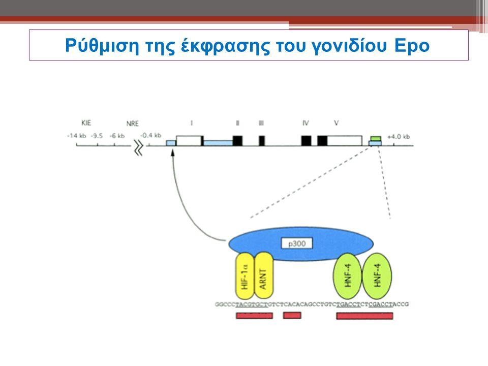 Ρύθμιση της έκφρασης του γονιδίου Εpο