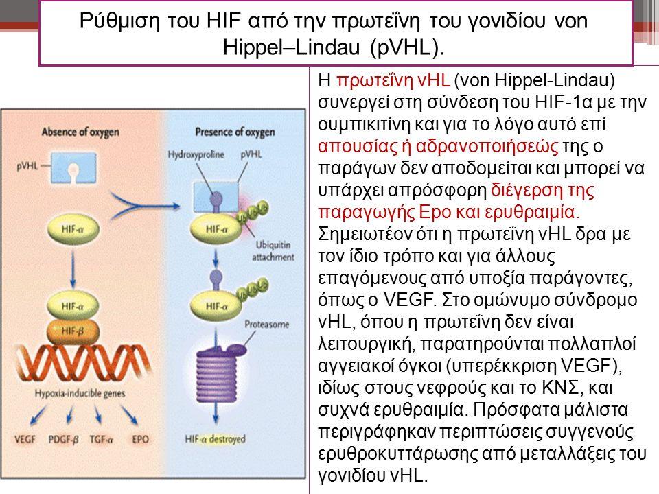 Ρύθμιση του HIF από την πρωτεΐνη του γονιδίου von Hippel–Lindau (pVHL). Η πρωτεΐνη vHL (von Hippel-Lindau) συνεργεί στη σύνδεση του HIF-1α με την ουμπ