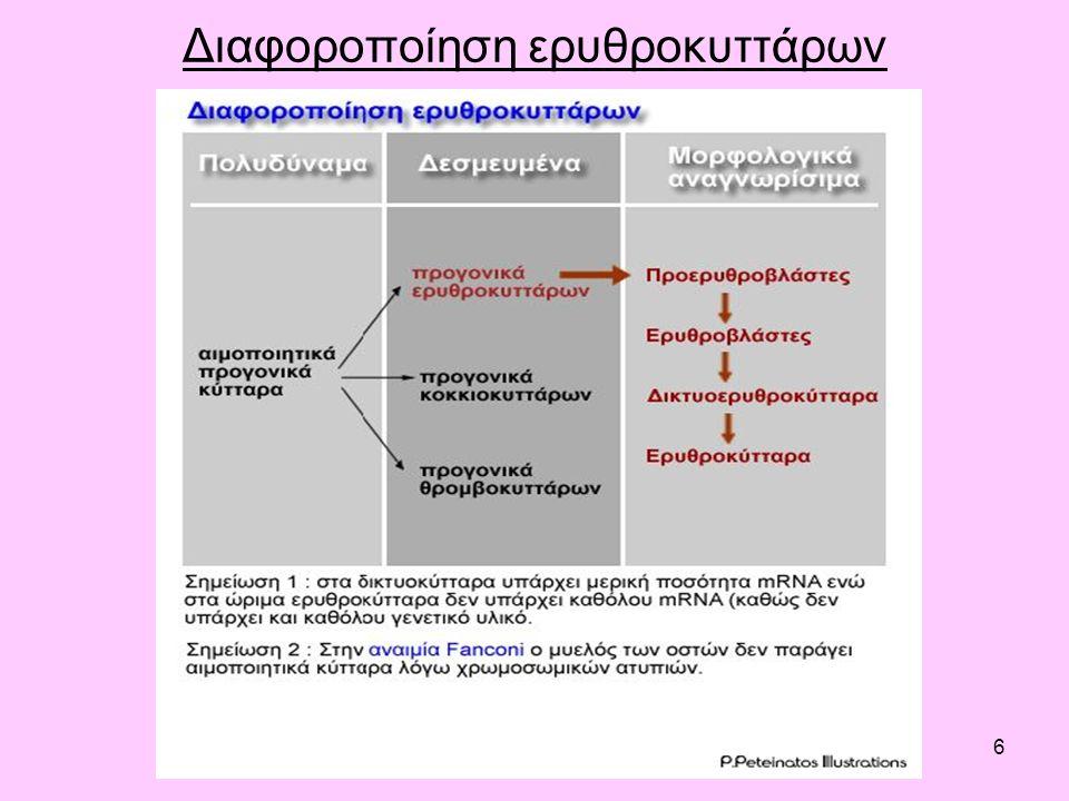 6 Διαφοροποίηση ερυθροκυττάρων
