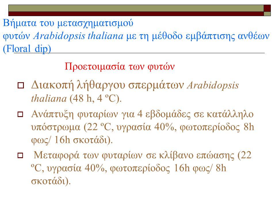 Βήματα του μετασχηματισμού φυτών Arabidopsis thaliana με τη μέθοδο εμβάπτισης ανθέων (Floral dip)  Διακοπή λήθαργου σπερμάτων Arabidopsis thaliana (48 h, 4 ºC).