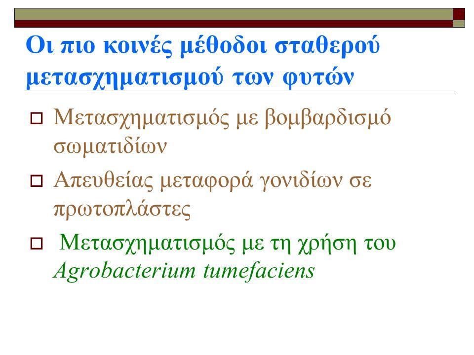 Οι πιο κοινές μέθοδοι σταθερού μετασχηματισμού των φυτών ΜΜετασχηματισμός με βομβαρδισμό σωματιδίων ΑΑπευθείας μεταφορά γονιδίων σε πρωτοπλάστες  Μ Μετασχηματισμός με τη χρήση του Agrobacterium tumefaciens