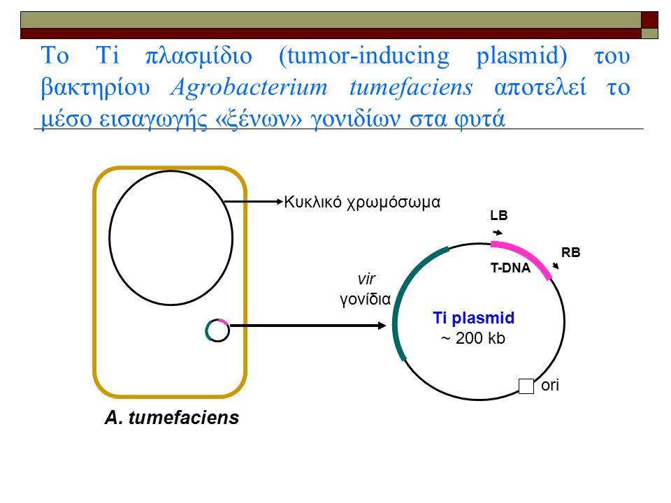 Το Ti πλασμίδιο (tumor-inducing plasmid) του βακτηρίου Agrobacterium tumefaciens αποτελεί το μέσο εισαγωγής «ξένων» γονιδίων στα φυτά A.