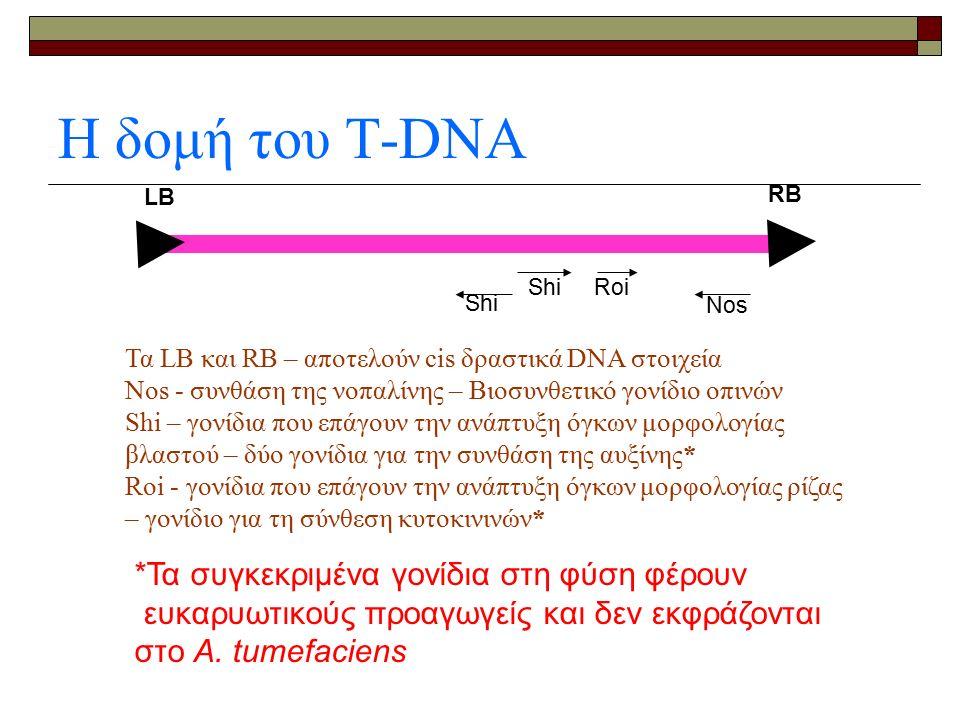 Η δομή του Τ-DNA Shi Nos RB Shi Roi LB Τα LB και RB – αποτελούν cis δραστικά DNA στοιχεία Nos - συνθάση της νοπαλίνης – Βιοσυνθετικό γονίδιο οπινών Shi – γονίδια που επάγουν την ανάπτυξη όγκων μορφολογίας βλαστού – δύο γονίδια για την συνθάση της αυξίνης* Roi - γονίδια που επάγουν την ανάπτυξη όγκων μορφολογίας ρίζας – γονίδιο για τη σύνθεση κυτοκινινών* *Τα συγκεκριμένα γονίδια στη φύση φέρουν ευκαρυωτικούς προαγωγείς και δεν εκφράζονται στο Α.