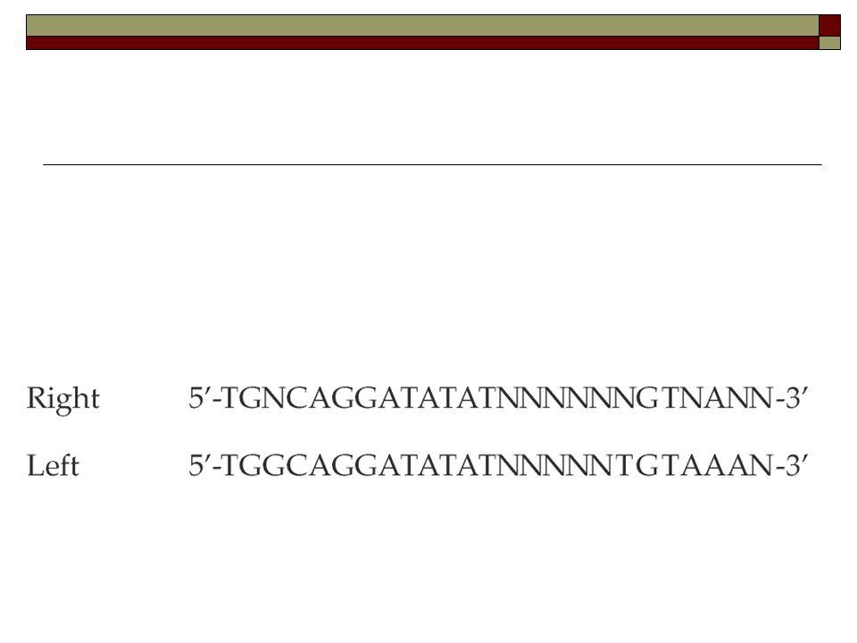  Υποκλωνοποίηση του υπό μελέτη γονιδίου ή προαγωγέα σε κατάλληλη περιοχή του πλασμιδίου που φέρει το Τ-DNA.