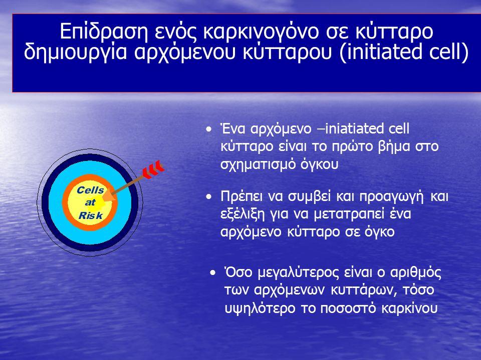 Επίδραση ενός καρκινογόνο σε κύτταρο δημιουργία αρχόμενου κύτταρου (initiated cell) Ένα αρχόμενο –iniatiated cell κύτταρο είναι το πρώτο βήμα στο σχημ