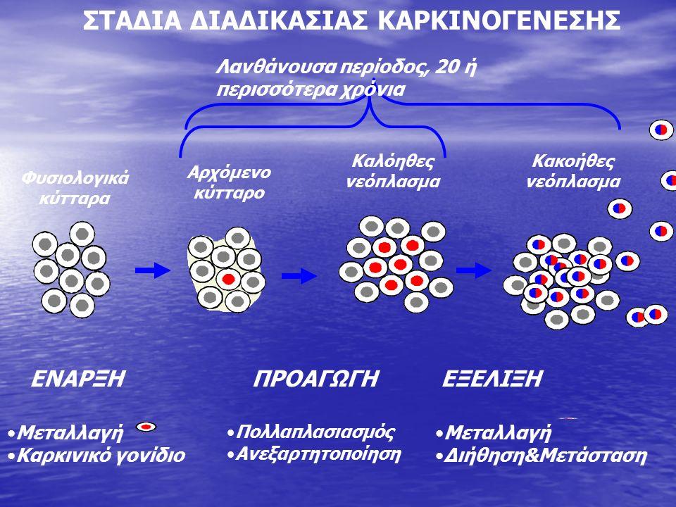 ΕΝΑΡΞΗΠΡΟΑΓΩΓΗΕΞΕΛΙΞΗ Μεταλλαγή Καρκινικό γονίδιο Πολλαπλασιασμός Ανεξαρτητοποίηση Μεταλλαγή Διήθηση&Μετάσταση ΣΤΑΔΙΑ ΔΙΑΔΙΚΑΣΙΑΣ ΚΑΡΚΙΝΟΓΕΝΕΣΗΣ Φυσιολογικά κύτταρα Αρχόμενο κύτταρο Καλόηθες νεόπλασμα Κακοήθες νεόπλασμα Λανθάνουσα περίοδος, 20 ή περισσότερα χρόνια