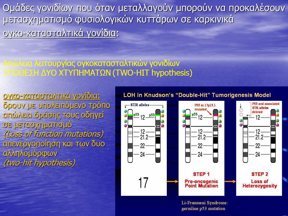 Απώλεια λειτουργίας ογκοκατασταλτικών γονιδίων ΥΠΟΘΕΣΗ ΔΥΟ ΧΤΥΠΗΜΑΤΩΝ (TWO-HIT hypothesis) ογκο-κατασταλτικά γονίδια: δρουν με υπολειπόμενο τρόπο απώλεια δράσης τους οδηγεί σε μετασχηματισμό (Loss of function mutations) απενεργοποίηση και των δυο αλληλομόρφων (two-hit hypothesis) Ομάδες γονιδίων που όταν μεταλλαγούν μπορούν να προκαλέσουν μετασχηματισμό φυσιολογικών κυττάρων σε καρκινικά ογκο-κατασταλτικά γονίδια: