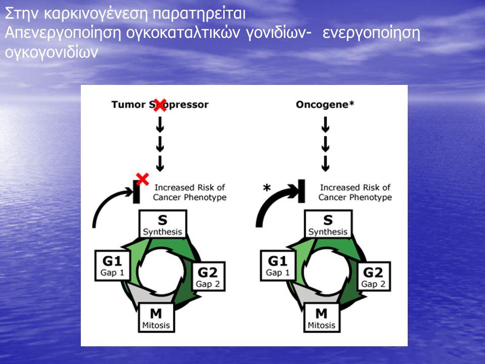Στην καρκινογένεση παρατηρείται Απενεργοποίηση ογκοκαταλτικών γονιδίων- ενεργοποίηση ογκογονιδίων