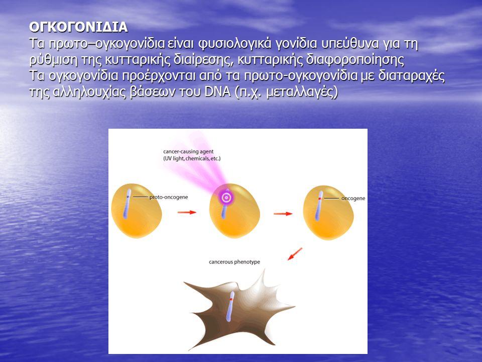 ΟΓΚΟΓΟΝΙΔΙΑ Τα πρωτο–ογκογονίδια είναι φυσιολογικά γονίδια υπεύθυνα για τη ρύθμιση της κυτταρικής διαίρεσης, κυτταρικής διαφοροποίησης Τα ογκογονίδια προέρχονται από τα πρωτο-ογκογονίδια με διαταραχές της αλληλουχίας βάσεων του DNA (π.χ.