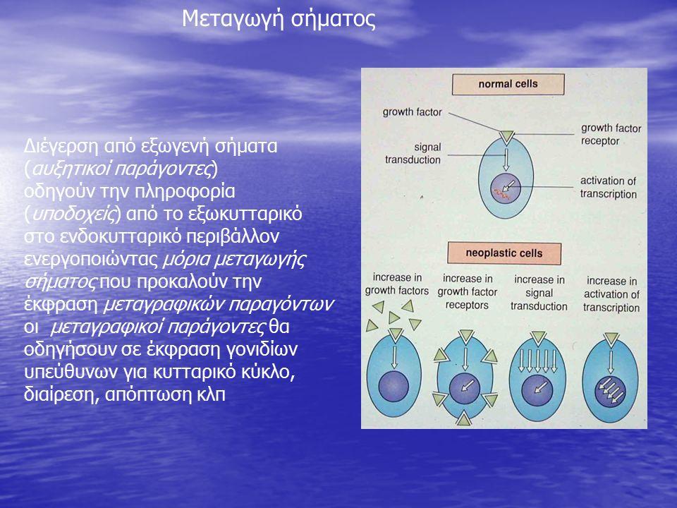 Διέγερση από εξωγενή σήματα (αυξητικοί παράγοντες) οδηγούν την πληροφορία (υποδοχείς) από το εξωκυτταρικό στο ενδοκυτταρικό περιβάλλον ενεργοποιώντας μόρια μεταγωγής σήματος που προκαλούν την έκφραση μεταγραφικών παραγόντων οι μεταγραφικοί παράγοντες θα οδηγήσουν σε έκφραση γονιδίων υπεύθυνων για κυτταρικό κύκλο, διαίρεση, απόπτωση κλπ Μεταγωγή σήματος