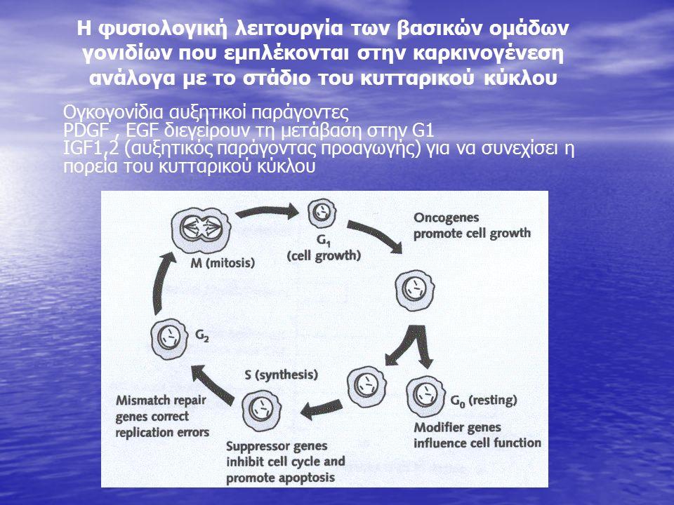 Η φυσιολογική λειτουργία των βασικών ομάδων γονιδίων που εμπλέκονται στην καρκινογένεση ανάλογα με το στάδιο του κυτταρικού κύκλου Ογκογονίδια αυξητικοί παράγοντες PDGF, EGF διεγείρουν τη μετάβαση στην G1 IGF1,2 (αυξητικός παράγοντας προαγωγής) για να συνεχίσει η πορεία του κυτταρικού κύκλου