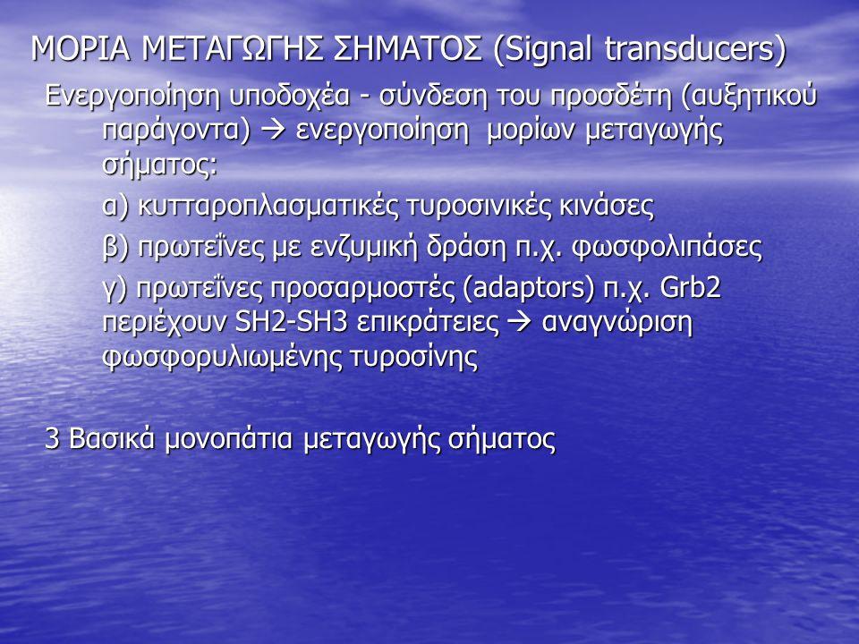ΜΟΡΙΑ ΜΕΤΑΓΩΓΗΣ ΣΗΜΑΤΟΣ (Signal transducers) Ενεργοποίηση υποδοχέα - σύνδεση του προσδέτη (αυξητικού παράγοντα)  ενεργοποίηση μορίων μεταγωγής σήματος: α) κυτταροπλασματικές τυροσινικές κινάσες β) πρωτεΐνες με ενζυμική δράση π.χ.