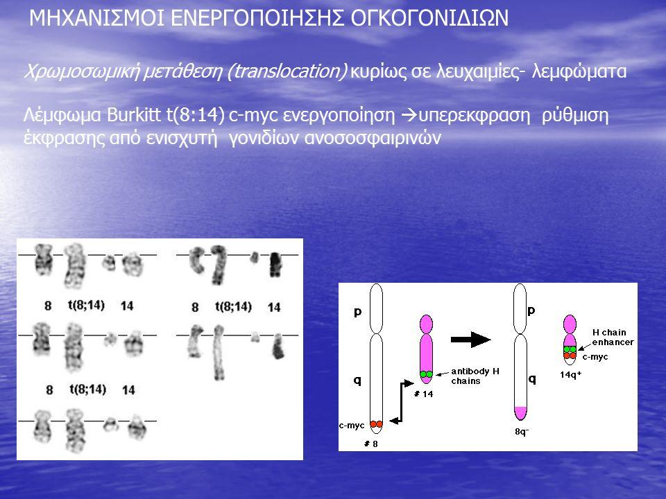 Χρωμοσωμική μετάθεση (translocation) κυρίως σε λευχαιμίες- λεμφώματα Λέμφωμα Burkitt t(8:14) c-myc ενεργοποίηση  υπερεκφραση ρύθμιση έκφρασης από ενισχυτή γονιδίων ανοσοσφαιρινών ΜΗΧΑΝΙΣΜΟΙ ΕΝΕΡΓΟΠΟΙΗΣΗΣ ΟΓΚΟΓΟΝΙΔΙΩΝ